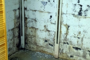 Seepage through wall, mud and silt, black mold growing in cracks | Before
