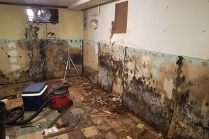 Black mold growth on sheetrock wall | Eco-Dry Waterproofing