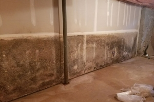 Drywall mold damage- Northern, NJ- Eco- Dry Waterproofing