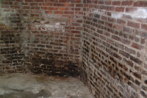 Basement mold damage- Northern, NJ- Eco- Dry Waterproofing